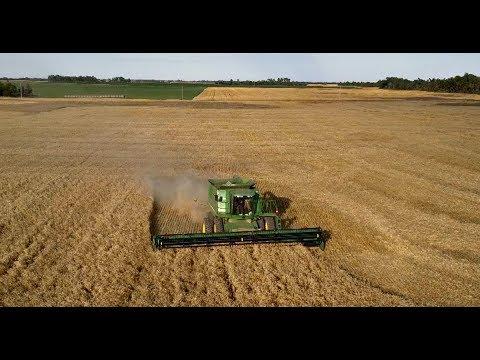 Kansas Wheat Harvest 2017 ~ Her POV