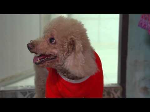 Pet Lover by Jerhigh : เจน ญาณทิพย์กับน้องหมา