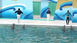 SeaworlD Дельфины 5.MP4