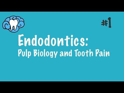 Endodontics | Pulp
