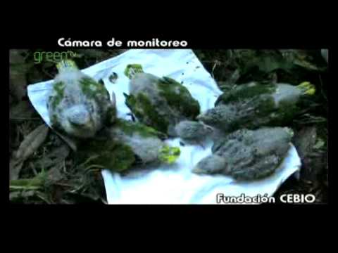 Conservation of the Yungas Forests - Argentina