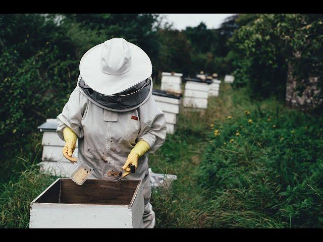 Harvesting Honey From Africanized Bees #Gallivanting | CaribbeanPot.com