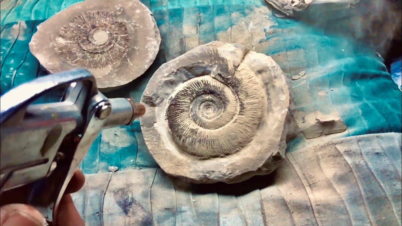 Rare Nautilus: Fossil Preparation! Plus Fish Jaw and Ammonites