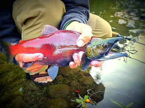 Float Fishing For Kokanee: Washington State