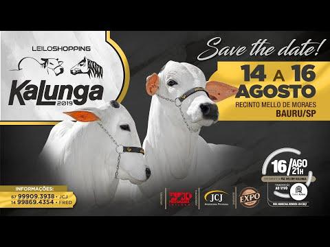 Lote 53 (Ringo do Kalunga - KLGA 2665)