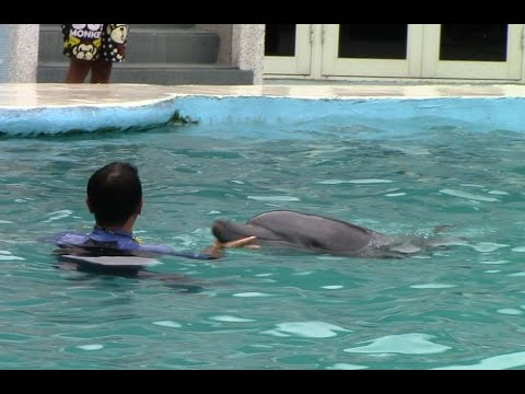 Indo-Pacific Bottlenose Dolphin Post Show Waterworks at Yehliu Ocean World