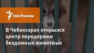 В Чебоксарах открылся первый центр передержки бездомных животных