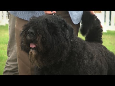 Southern Counties 2017 Dog Show - Working group Highlights