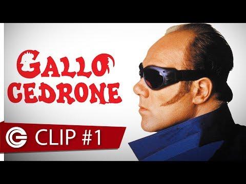 Gallo Cedrone - Comizio