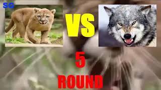 Ягуар Пантера Леопард против Тигра Льва Медведя Крокодила и Волков
