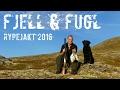 RYPEJAKT 2016 - Fjell & Fugl / Mountains and Birds - Ptarmigan hunting 2016