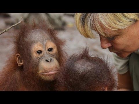 Voice of the orangutans - Lone Drøscher Nielsen