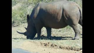 Mon voyage en Afrique du Sud?
