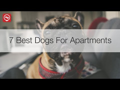 7 Best Dogs for Apartments