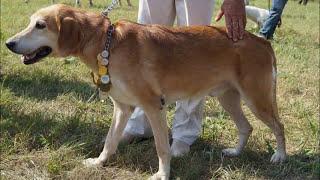 Всероссийская выстовка охотничих собак  г. Тула 2012 г.