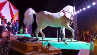 vuclip Mansi events  horse dans