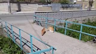 Cats having some sex