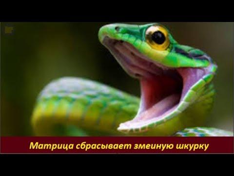 МАТРИЦА сбрасывает змеиную шкурку  № 1960