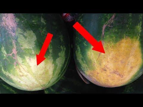 Как выбрать вкусный сладкий арбуз