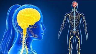 Поражение нервной системы вирусом COVID-19. Симптомы. Лечение