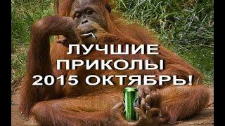 ЛУЧШИЕ ВИДЕО ПРИКОЛЫ 2015 ОКТЯБРЬ! ДОМАШНИЕ ПРИКОЛЫ