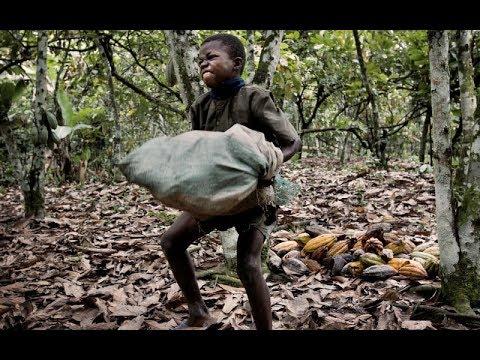Colombia Niños Esclavos En Industria Del Chocolate 2018 !!!