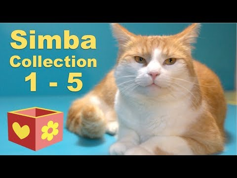 Cute Cat Collection | Bellboxes videos | Simba 1 - 5