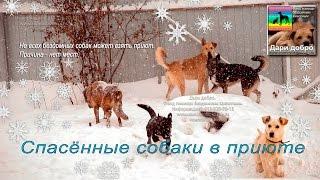 Спасенные собаки в приюте Дари добро Novosibirsk priyut dlya jivotnix
