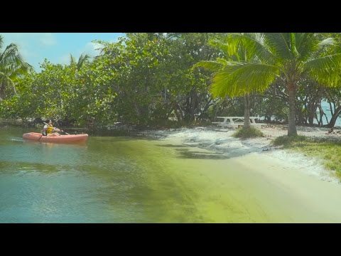 Florida Travel: Kayaking In Miami