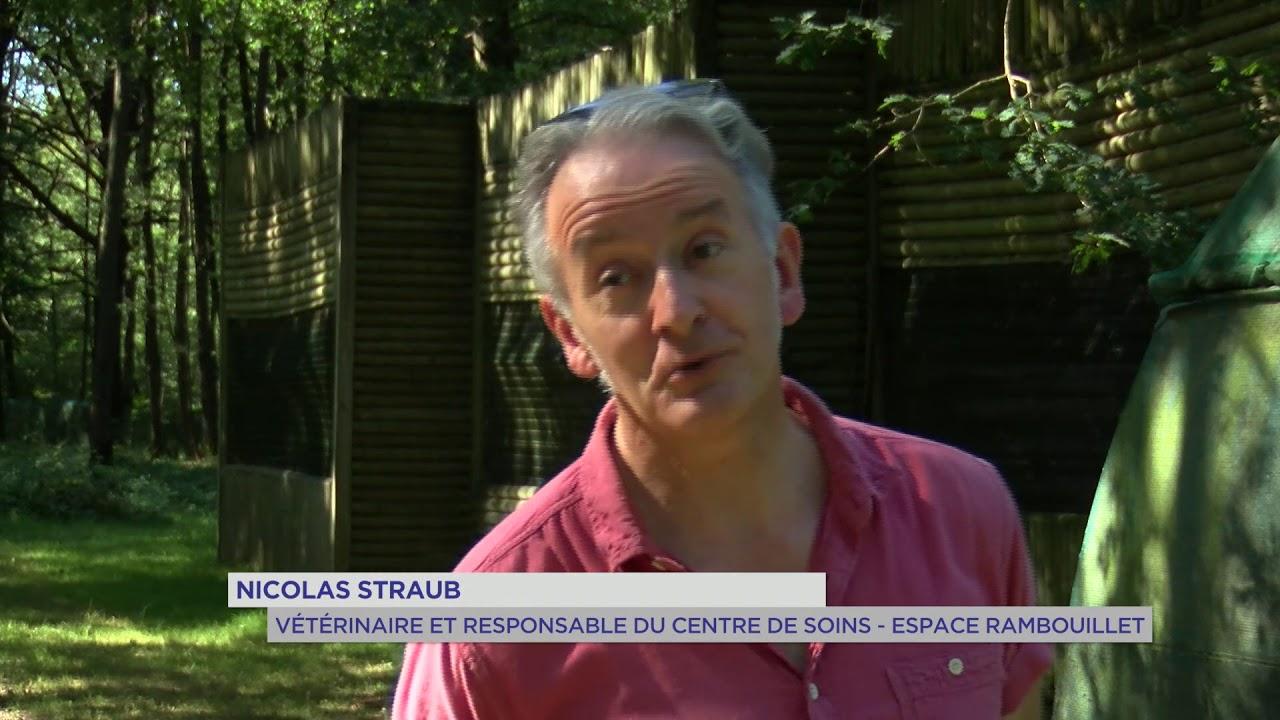 Espace Rambouillet : un centre de soins pour rapaces