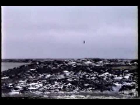1994 Arctic Birds and Animals in the Arctic and in Connecticut GEFerris