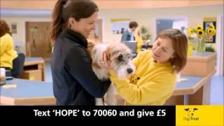 Dogs Trust: Tv Ad November 2013