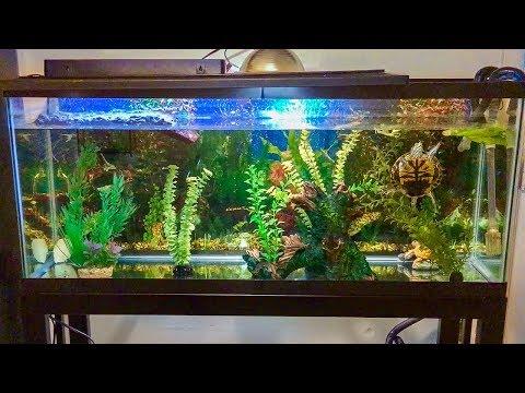 Red Eared Slider Turtle Tank Setup  How To Set Up A Turtle Tank 55 Gallon Aquarium