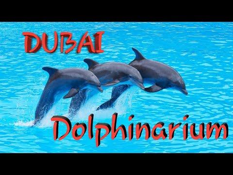 DUBAI | DUBAI DOLPHINARIUM | Dolphins | Sea Lion | Explorer | Dolphin Show