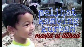 Kambing Kurban Masjid Al Ittihad Pejaten Banyak Banget!
