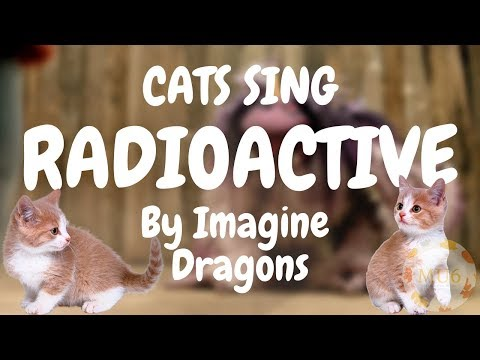 Cats Sing Radioactive by Imagine Dragons | Cats Singing Song