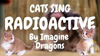Cats Sing Radioactive by Imagine Dragons   Cats Singing Song