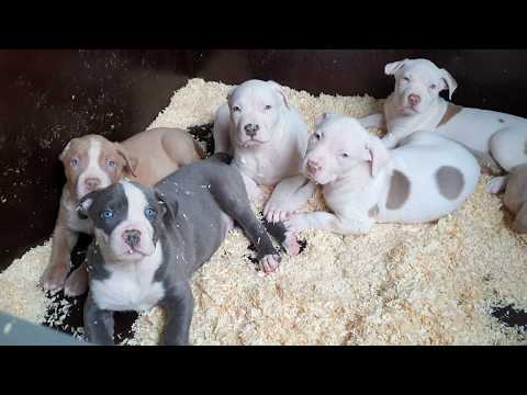 Wakey Wakey Beautiful Little Puppies With Your Blue Colored Eyes..