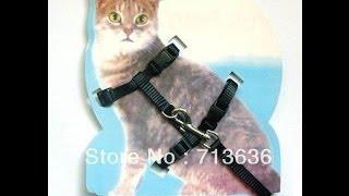 Поводок для кота с Aliexpress US $ 2.64