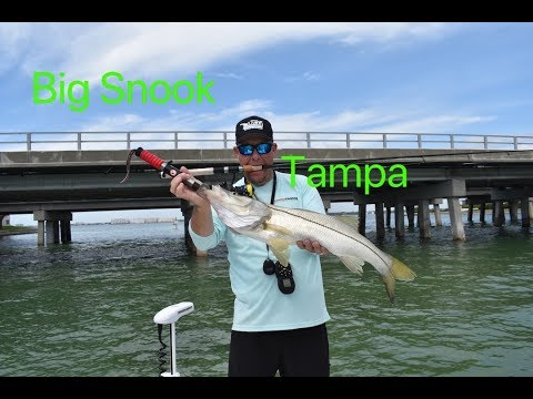 Big Snook And Trout In Tampa Bay!!!