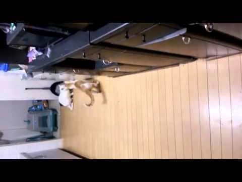 面白動画 。やっぱり気になる猫【A cat run. A cat walk.】