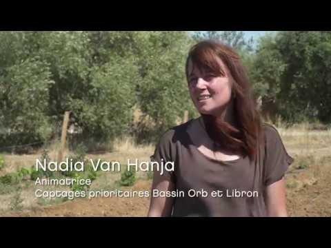 Domaine De La Massole : Système Agroforestier En Viticulture