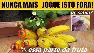Nunca mais Jogue Fora isto da Banana!