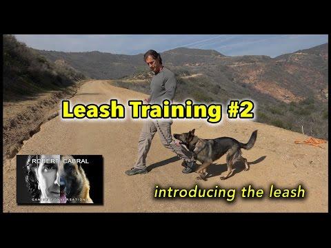 Leash Training 2 - Introducing the Leash - Dog Training Video