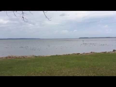 Duck population Eastbank Campground Lake Seminole
