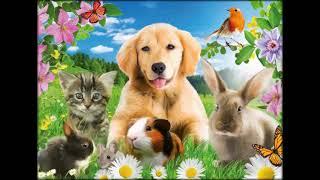 витамин тетравит для животных инструкция