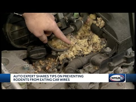 Auto Experts Share Tips On Preventing Rodents From Eating Car Wires