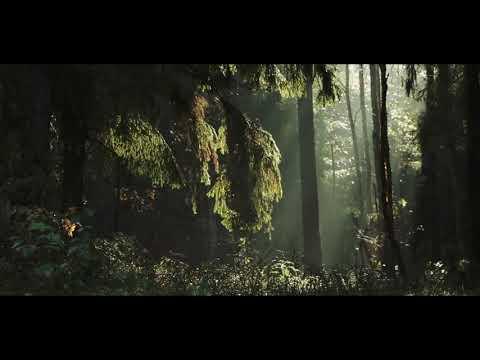 Lietuvos miškai iš paukščio skrydžio