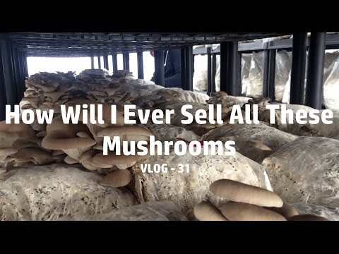 WTF VLOG - 31 How Will I Ever Sell All These Mushrooms