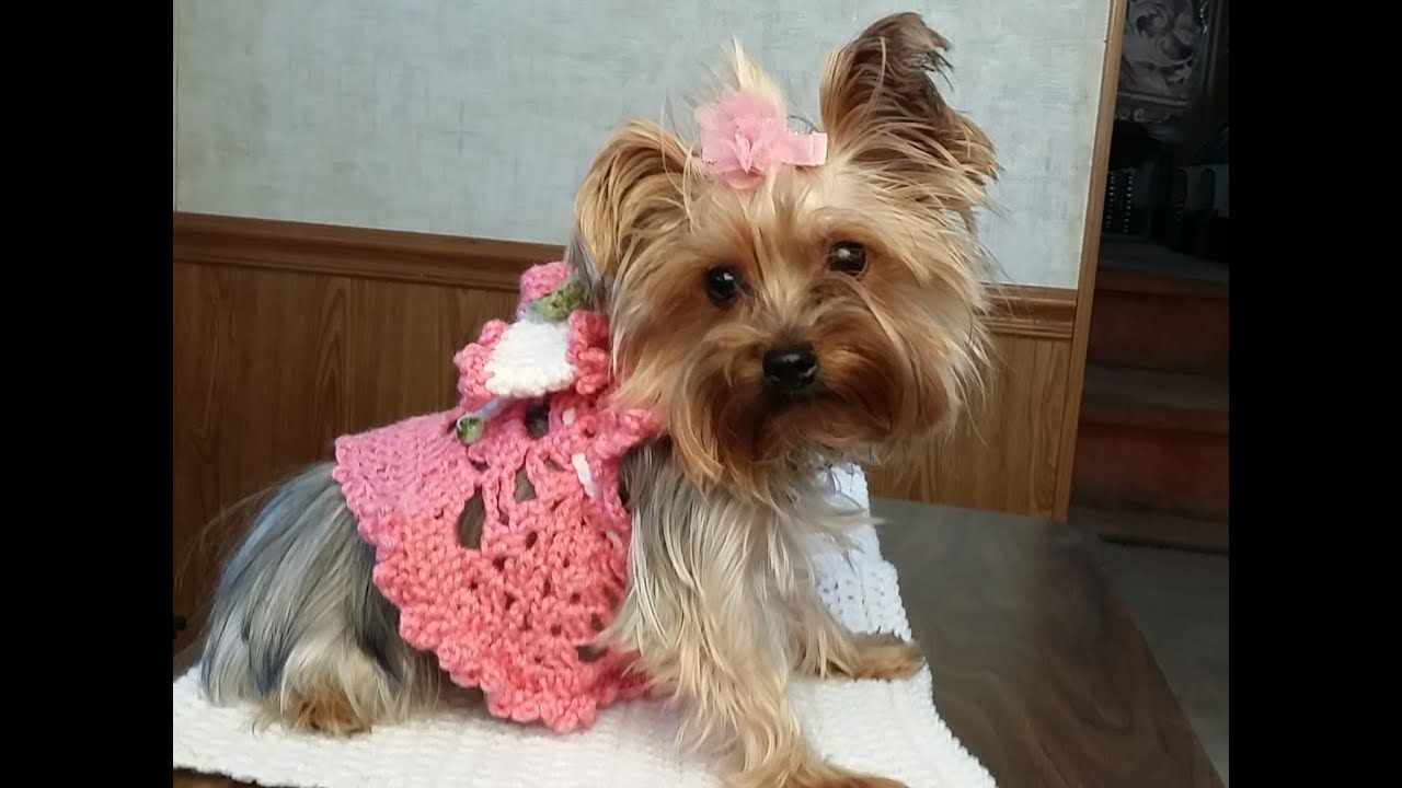 Crochet glamas adorable princess puppy dress youtube crochet glamas adorable princess puppy dress bankloansurffo Images